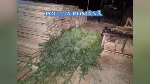 Percheziții de amploare în Alba, la un grup care tăia ilegal arbori din pădure
