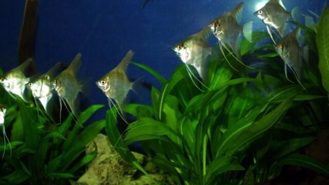 La Tulcea s-a deschis unul dintre cele mai mari acvarii din Europa