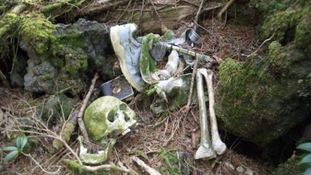 IMAGINI TULBURATOARE! Padurea SPANZURATILOR exista! ... In Japonia - Imaginea 13
