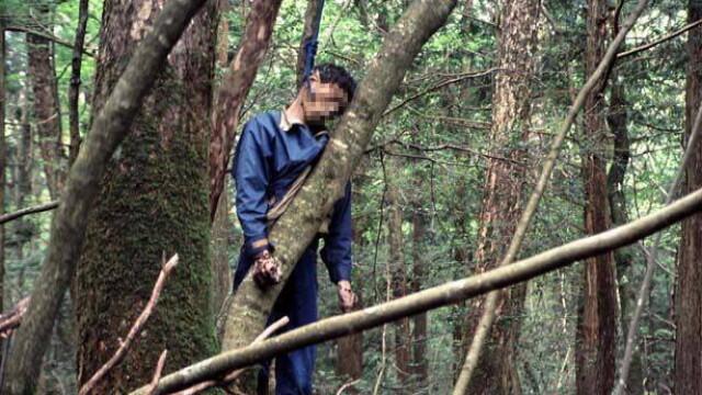 IMAGINI TULBURATOARE! Padurea SPANZURATILOR exista! ... In Japonia - Imaginea 12
