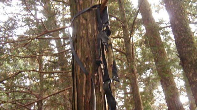 IMAGINI TULBURATOARE! Padurea SPANZURATILOR exista! ... In Japonia - Imaginea 11