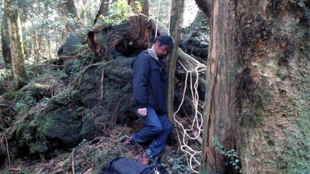 IMAGINI TULBURATOARE! Padurea SPANZURATILOR exista! ... In Japonia - Imaginea 7