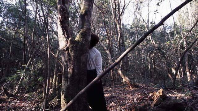 IMAGINI TULBURATOARE! Padurea SPANZURATILOR exista! ... In Japonia - Imaginea 3