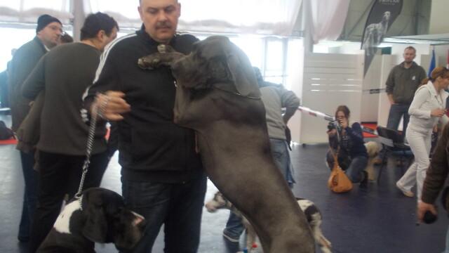 500 de caini din 95 de rase au defilat la Timisoara.Vezi GALERIE FOTO cu cele mai premiate patrupede - Imaginea 7