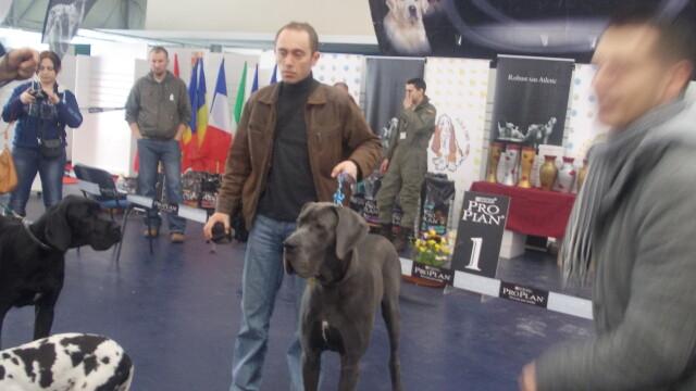 500 de caini din 95 de rase au defilat la Timisoara.Vezi GALERIE FOTO cu cele mai premiate patrupede - Imaginea 8