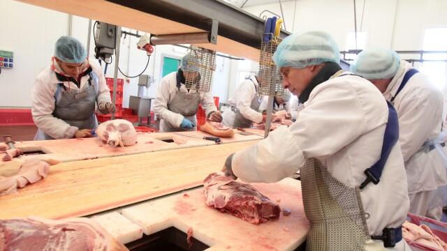 Scandal urias in industria carnii din Polonia. Presa a descoperit animale indopate cu antibiotice