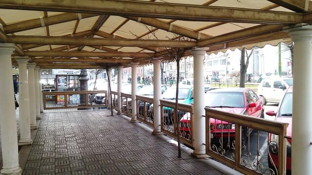Terasele din Arad au inghitit si copacii, nu doar trotuarele. Ce spun specialistii fitosanitari - Imaginea 1