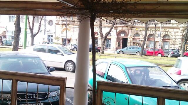 Terasele din Arad au inghitit si copacii, nu doar trotuarele. Ce spun specialistii fitosanitari - Imaginea 5