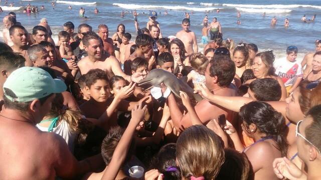 Ce s-a intamplat cu puiul de delfin scos din apa pentru amuzamentul turistilor. Toti si-au facut nepasatori selfie-uri cu el
