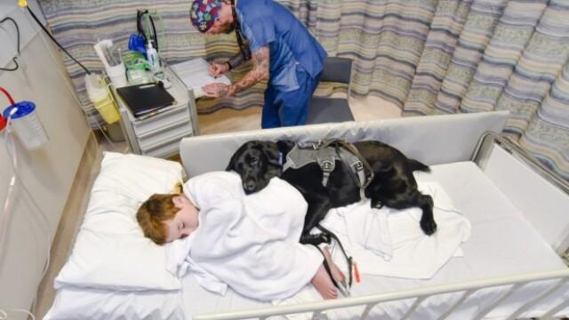 Un caine loial refuza sa se dezlipeasca de prietenul sau, un copil autist, cand acesta este dus la spital. Galerie Foto - Imaginea 1