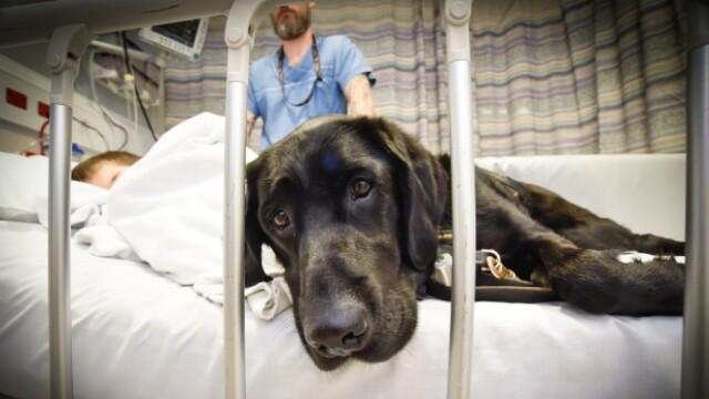 Un caine loial refuza sa se dezlipeasca de prietenul sau, un copil autist, cand acesta este dus la spital. Galerie Foto - Imaginea 2