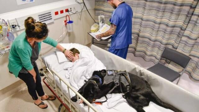 Un caine loial refuza sa se dezlipeasca de prietenul sau, un copil autist, cand acesta este dus la spital. Galerie Foto - Imaginea 3