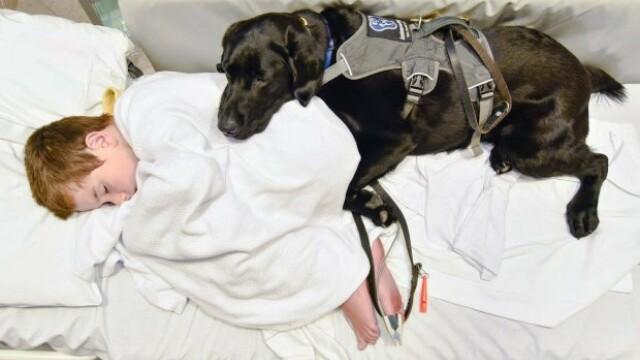 Un caine loial refuza sa se dezlipeasca de prietenul sau, un copil autist, cand acesta este dus la spital. Galerie Foto - Imaginea 4