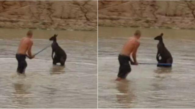 Pedeapsa primita de doi australieni care au omorat cu bestialitate un cangur. Politia a aflat in mod intamplator de fapta