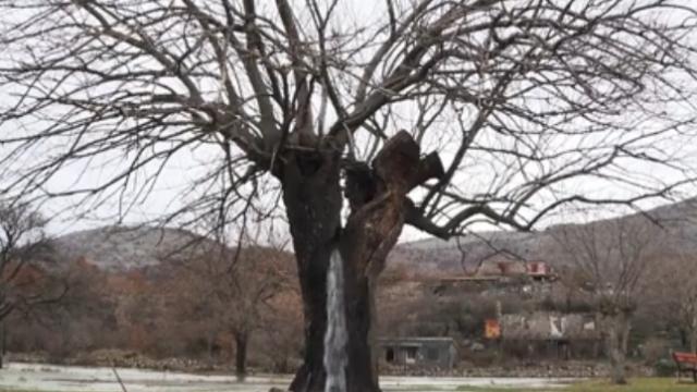 copac izvor apa