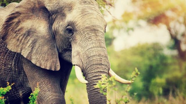 Patru elefanți au murit, după ce au fost loviți de un tren în India