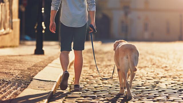 Un fost soldat a ucis un om pentru că ura persoanele care își plimbă câinii