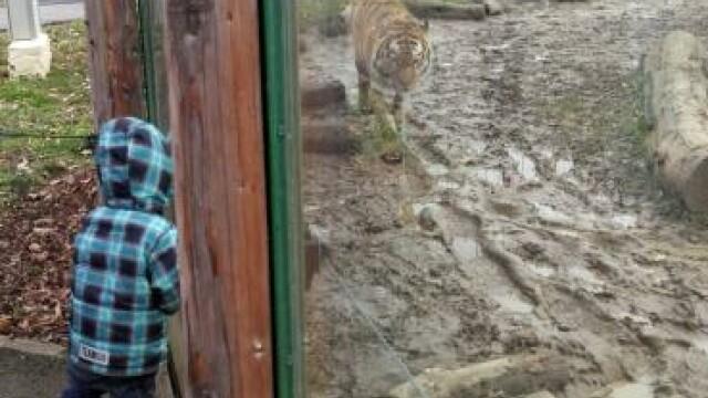 O mamă și copiii săi, uitați în Grădina Zoologică din Oradea