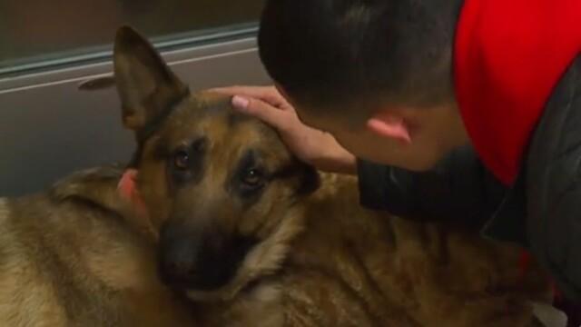 Un câine e grav rănit, după ce i-a salvat viaţa stăpânului său: \
