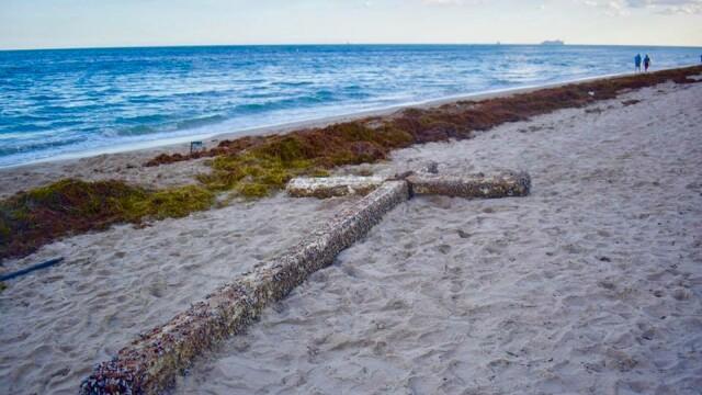 Apariție misterioasă pe o plajă din Florida. Nimeni nu știe de unde ar proveni