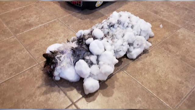 O pisică a supraviețuit miraculos după ce a fost găsită înghețată