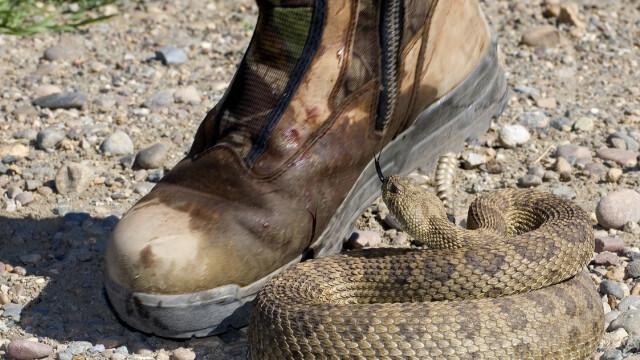 Ce a făcut un bărbat după ce l-a mușcat un șarpe. Voia ca soția lui să moară cu el