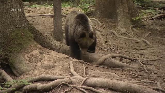 S-a așezat, în zăpadă, lângă un urs pentru a-l hrăni. Ce a urmat. VIDEO