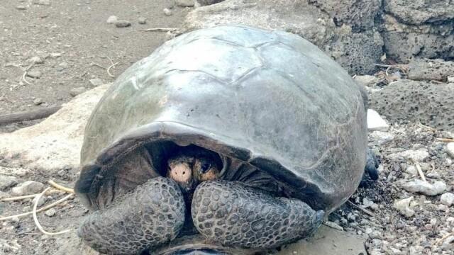 Descoperire surprinzătoare în Galapagos. Se credea că a dispărut acum 100 de ani