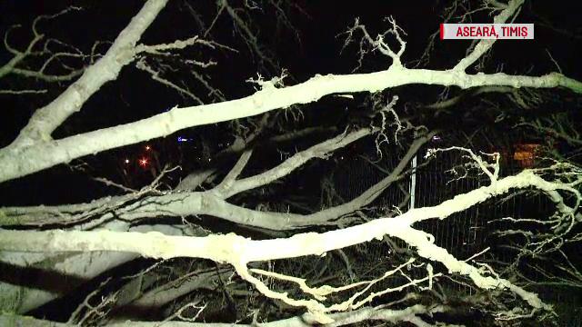 Drumuri blocate din cauza vântului şi viscolului. Copaci şi stâlpi au căzut pe şosele - Imaginea 3