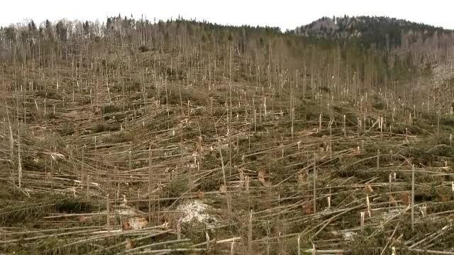 Ce a provocat fenomenul neobișnuit care a devastat pădurea din Prahova
