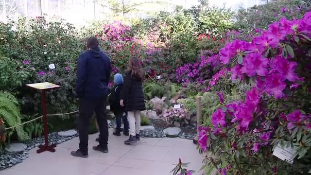 Principalele atracții de la grădina botanică din Iași. Cele mai apreciate exponate - Imaginea 3