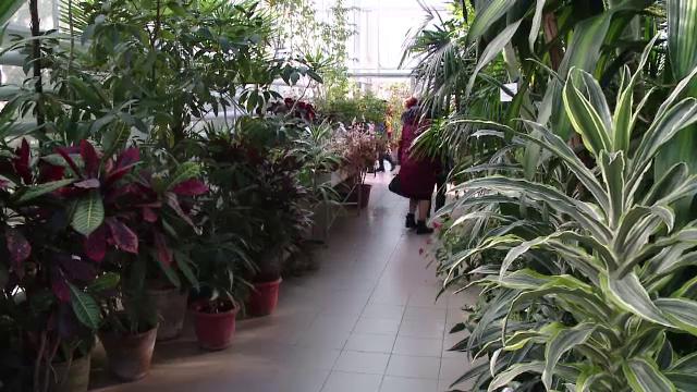 Principalele atracții de la grădina botanică din Iași. Cele mai apreciate exponate - Imaginea 4