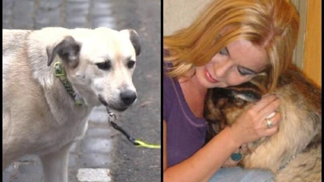 Ce s-a întâmplat cu câinii Cristinei Țopescu
