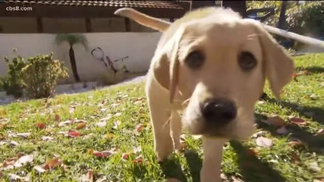 O familie din SUA a plătit 50.000 de dolari ca să își cloneze câinele mort