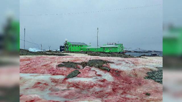 Fenomen bizar în Antarctica. De ce zăpada a devenit sângerie. VIDEO
