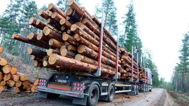 Doi frați, bătuți de șoferii unor camioane care transportau lemne, la Orăștie