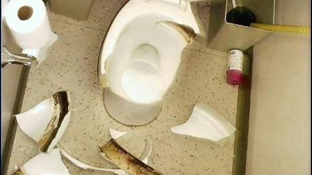 vas de toaleta spart