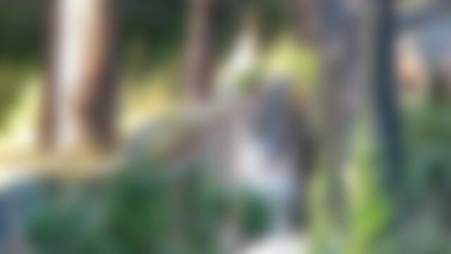 puma, blur