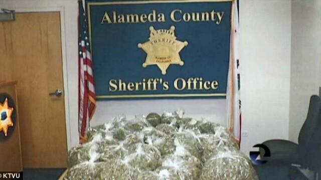 Un traficant de droguri, arestat, dupa ce politia a gasit 15 kg de marijuana si un aligator in casa - Imaginea 3