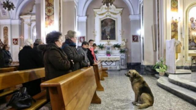Lectia de loialitate data de un caine. Isi asteapta zilnic in biserica stapana moarta de 2 luni - Imaginea 1