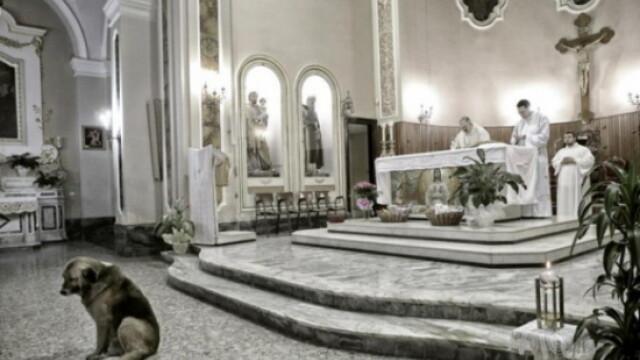Lectia de loialitate data de un caine. Isi asteapta zilnic in biserica stapana moarta de 2 luni - Imaginea 2