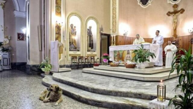Lectia de loialitate data de un caine. Isi asteapta zilnic in biserica stapana moarta de 2 luni - Imaginea 3