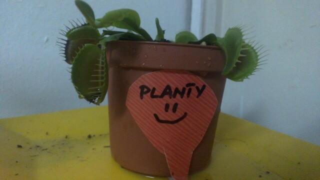 "O planta carnivora isi povesteste ""experienta de viata"" pe o retea de socializare. Afla povestea ei - Imaginea 1"