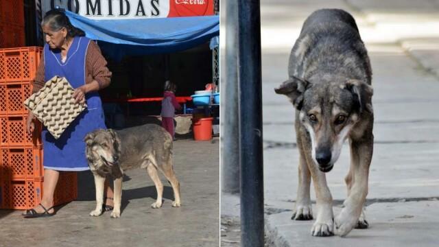 Un caine din Bolivia si-a asteptat stapanul cinci ani, dupa ce acesta a murit intr-un accident - Imaginea 4