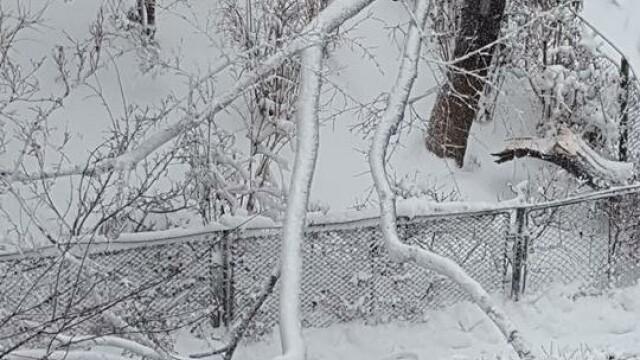 Capitala sub zapada: 500 de copaci si stalpi de inalta tensiune s-au prabusit. Numerele la care puteti cere ajutor Primariei - Imaginea 2