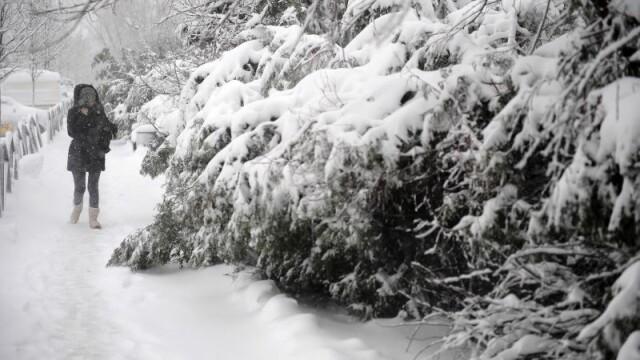 Capitala sub zapada: 500 de copaci si stalpi de inalta tensiune s-au prabusit. Numerele la care puteti cere ajutor Primariei - Imaginea 5