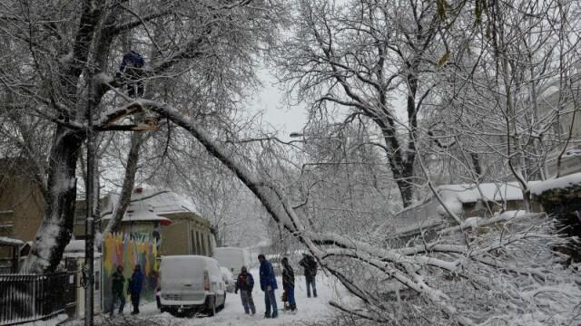Capitala sub zapada: 500 de copaci si stalpi de inalta tensiune s-au prabusit. Numerele la care puteti cere ajutor Primariei - Imaginea 6