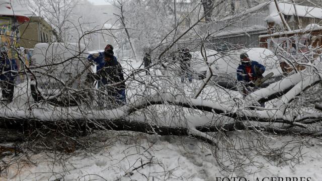Capitala sub zapada: 500 de copaci si stalpi de inalta tensiune s-au prabusit. Numerele la care puteti cere ajutor Primariei - Imaginea 8