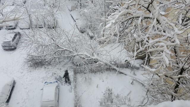 Capitala sub zapada: 500 de copaci si stalpi de inalta tensiune s-au prabusit. Numerele la care puteti cere ajutor Primariei - Imaginea 10