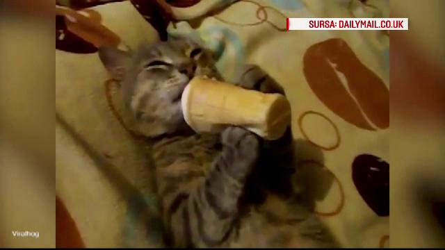 Viralul inceputului de an: felina care se relaxeaza in pat si \